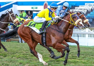 Nebraas takes gold at Greyville